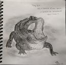 Aligator_KittyYeung