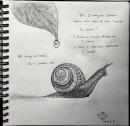snail_KittyYeung