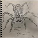 spider_kittyyeung