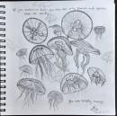 Jellyfish_KittyYeung